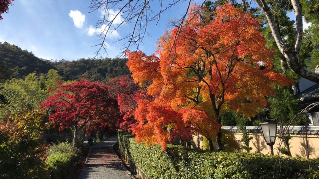 奥嵯峨の紅葉